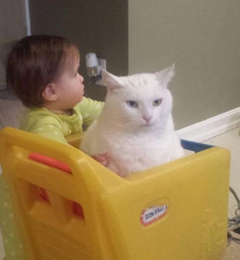 【猫画像】早い者勝ち。それは社会のルール・・・