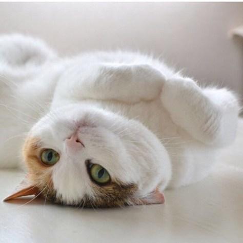 【猫画像】ゴロン