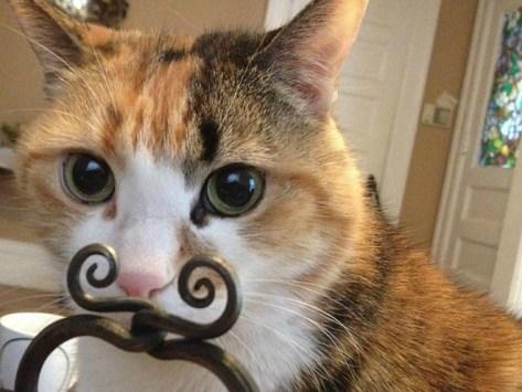 【猫画像】ひげ