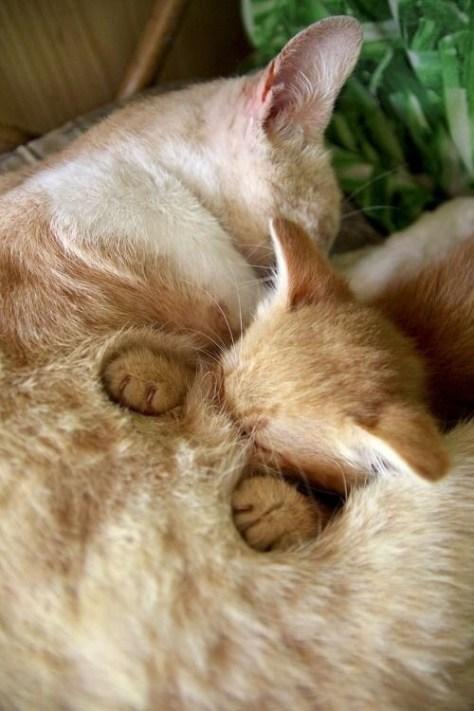 【猫画像】埋もれる子猫
