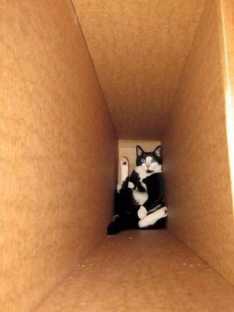 【猫画像】こんなとこに!