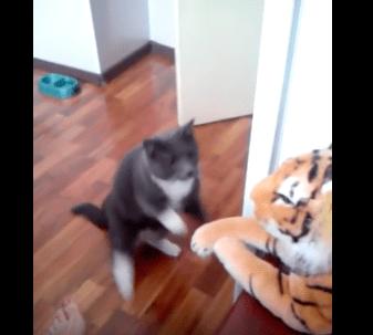 cat_hates_tiger02