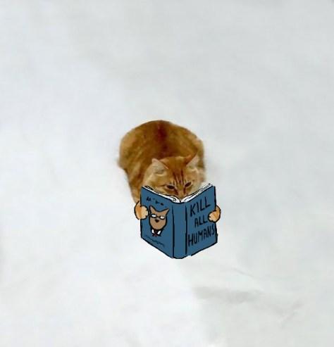 doodle_cat_photo03