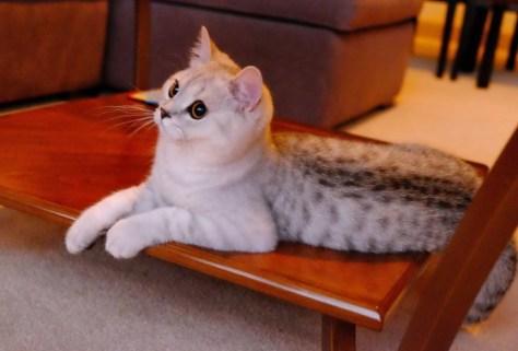 【猫画像】アザラシ!?