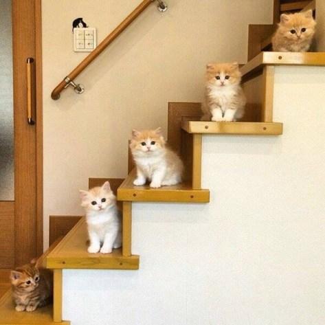 【猫画像】猫階段