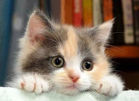 【猫画像】気になる気になる