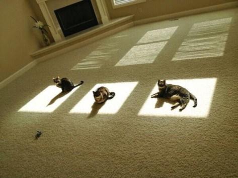 【猫画像】あたたかい場所をキープ