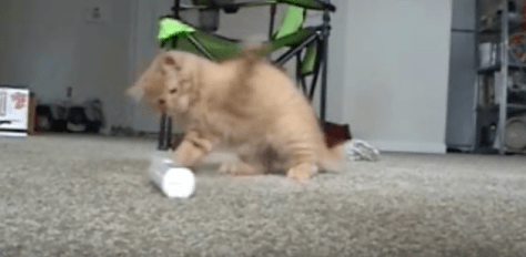 cat_vs_electric_toothbrush02