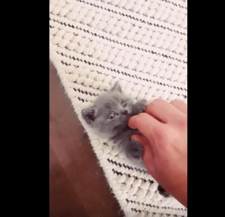 cutest_kitten_open_01