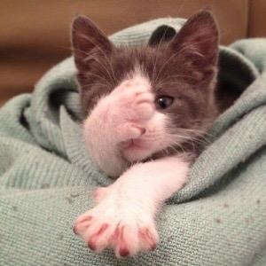【猫画像】あちゃ〜