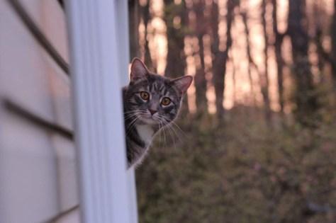 【猫画像】え、なに?