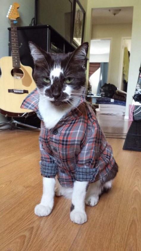 【猫画像】コワモテのイケニャン