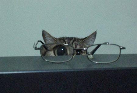 【猫画像】ズーム!!