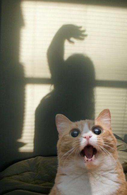 【猫画像】キャー!!