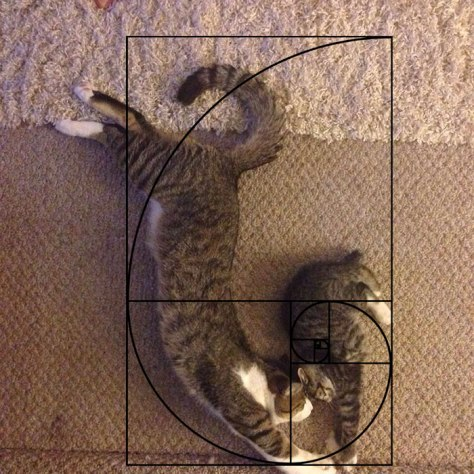 cat_furbonacci_sequence10