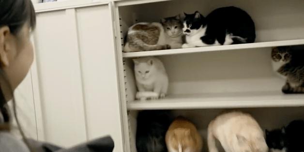 【猫CM】猫たちに占領される!?勤務中にオフィスが猫だらけになると・・・