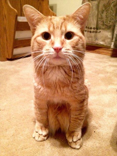 funny_cat201602_02