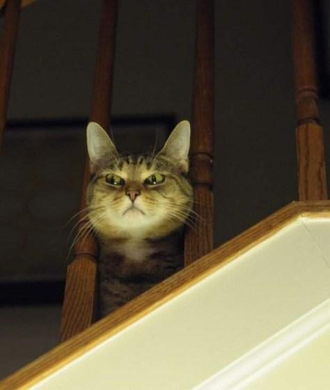 【猫画像】狙われてる!?