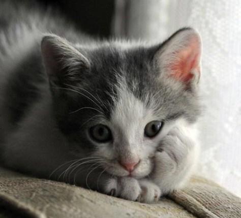 【猫画像】考える猫