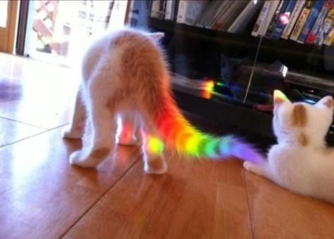 【猫画像】レインボーしっぽ