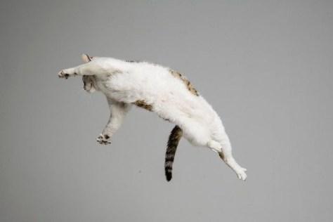 【猫画像】猫、跳ぶ