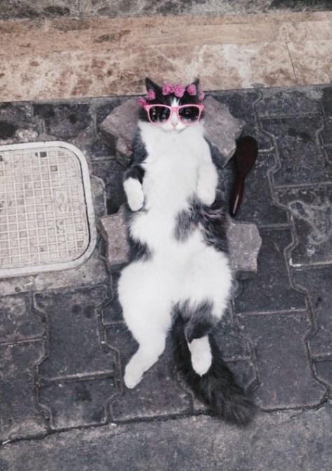 【猫画像】くつろぎタイム!?