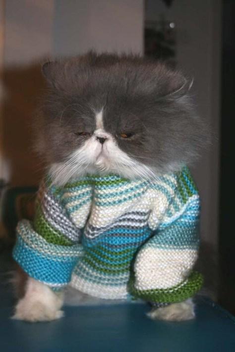 【猫画像】寝起き