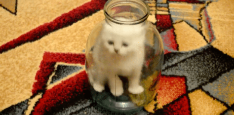 cat_in_the_jar01