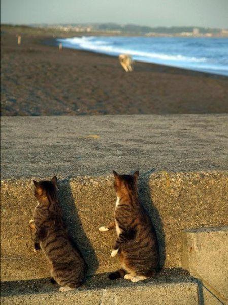 【猫画像】不審者2名?