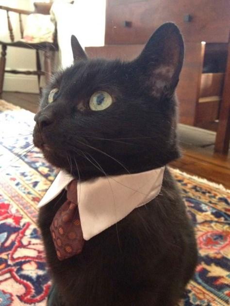 【猫画像】今日はビシッと!?