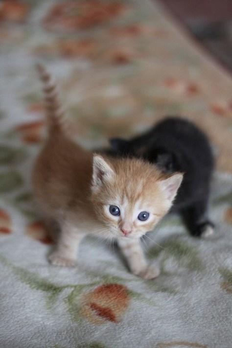【猫画像】ちびっ子