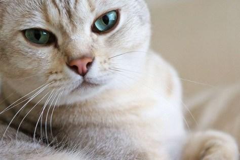 【猫画像】おはよう