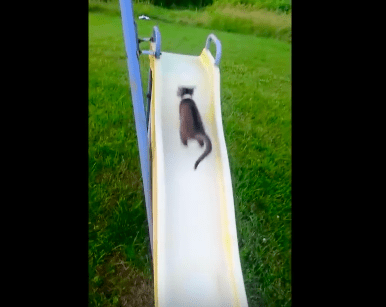 kittens_on_slides07