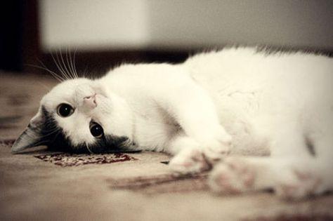 【猫画像】ゴロ寝