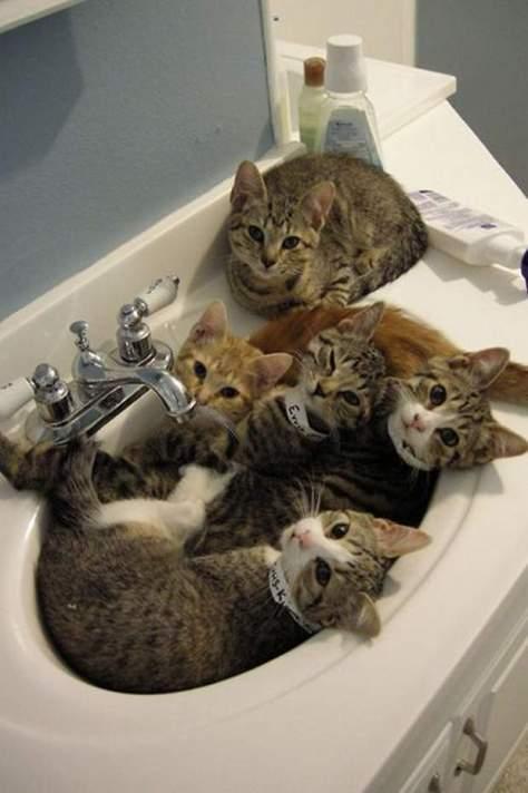 【猫画像】洗面所使えない・・・