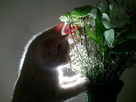 【猫画像】逆光