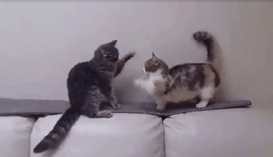 vital_cat_fight02