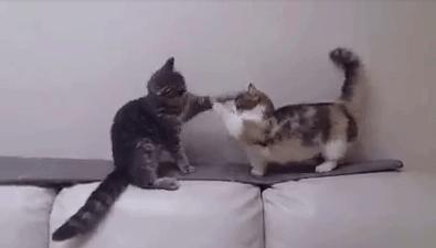 vital_cat_fight03