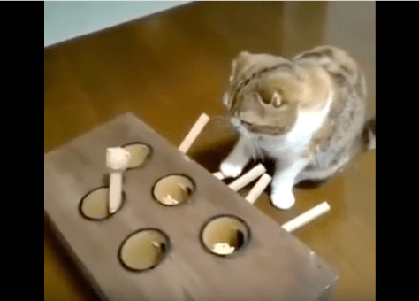Ingenious_cat_toy04