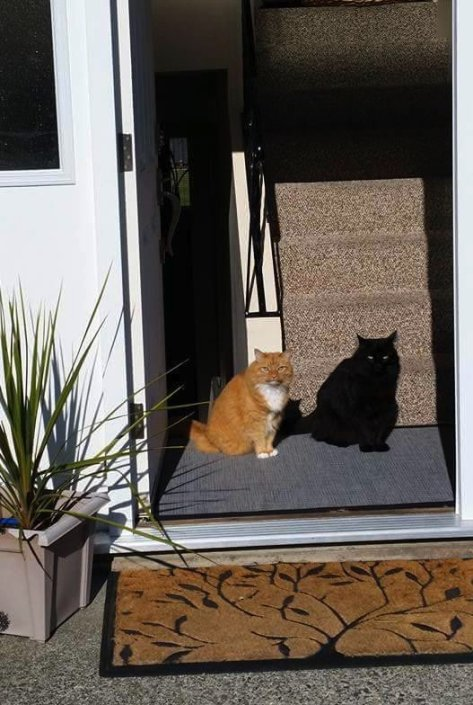 cat_and_shadow_cat01
