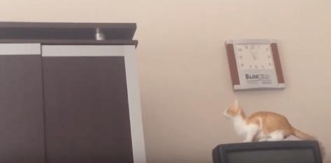cat_jump_fail02