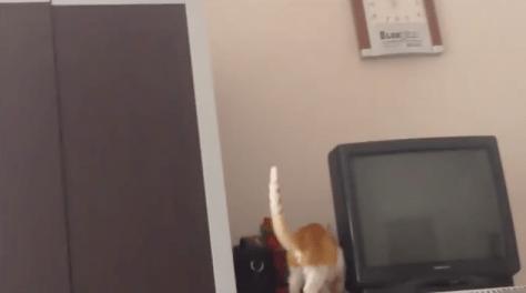 cat_jump_fail06
