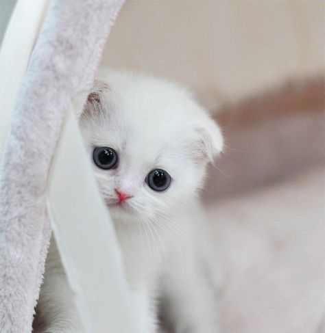 【猫画像】困り顔