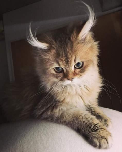 【猫画像】上目遣い