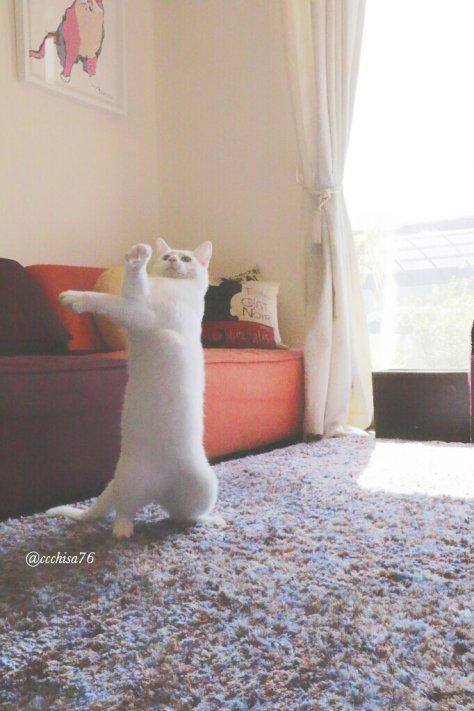 mirko_the_cat07