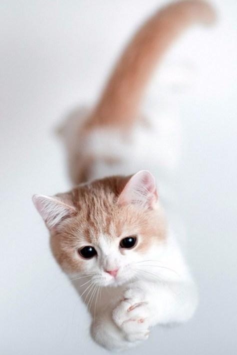 【猫画像】ナイスキャッチ!