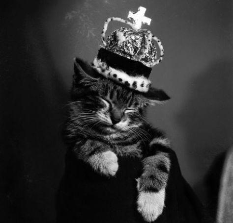 【猫画像】猫キング