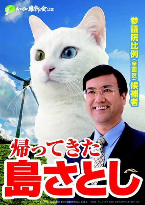 cat_candidate01