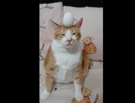 egg_on_cat02