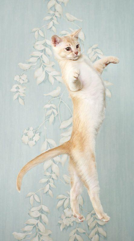 【猫画像】キレのある動き
